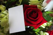 pic of saying sorry  - A red rose and orchids with a blank white card for a message - JPG