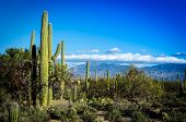 stock photo of southwest  - Wide view of the desert countryside of Tucson - JPG