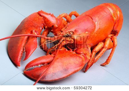 Red Lobster on a grey background