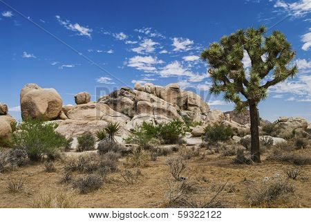 Joshua Tree And Stone Landscape