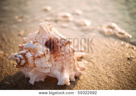 Spiral seashell on the sandy beach with sun reflection on the water