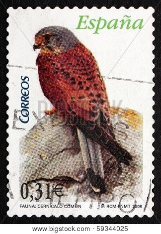 Postage Stamp Spain 2008 Common Kestrel, Bird Of Prey