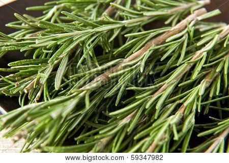 Sprigs Of Fresh Rosemary
