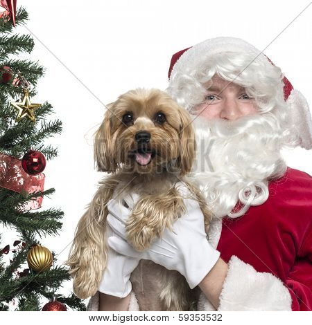 Close-up of Santa Claus holding a lapdog panting, isolated on white
