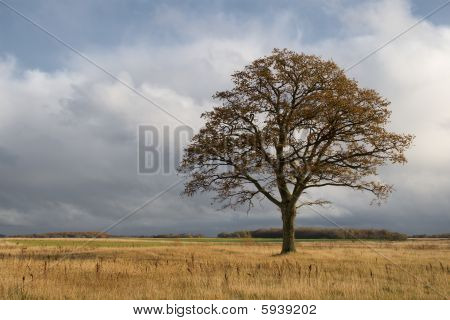 lonely oak on autumn day