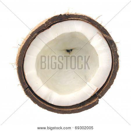 Haft Of Coconut