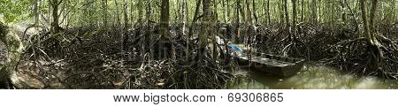 Panorama Of Mangrove Forest