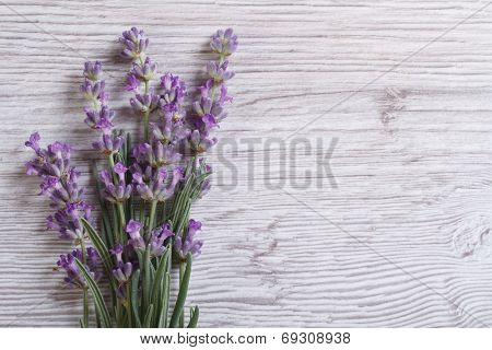 Bouquet Of Fragrant Lavender Flowers. Floral Frame