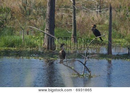 Pretty Birds Near Water