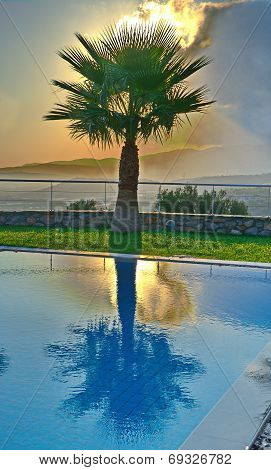 Palm Tree In An Aegean Sunrise