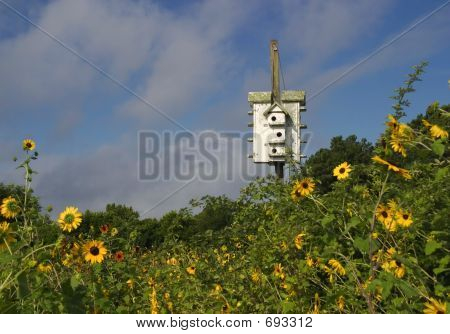 Birdhouse With Sunflowers