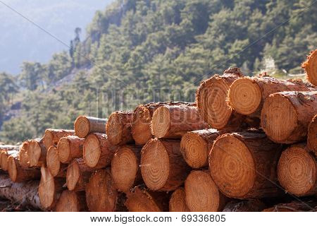 timber logging