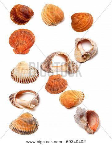 Letter R Composed Of Seashells