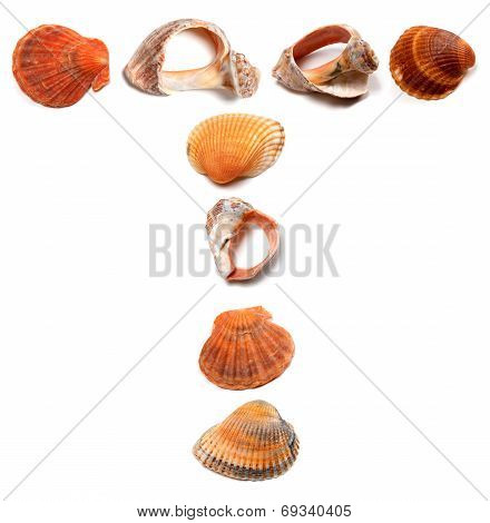 Letter T Composed Of Seashells