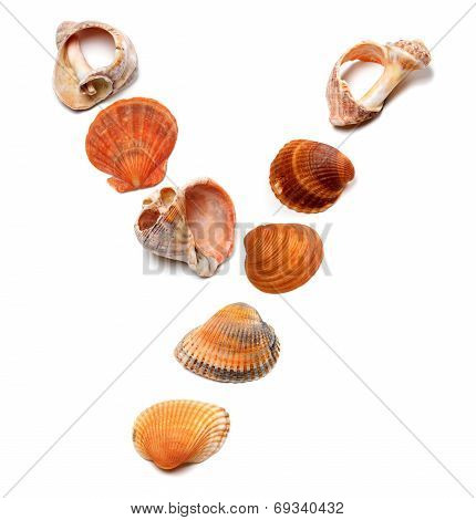 Letter Y Composed Of Seashells