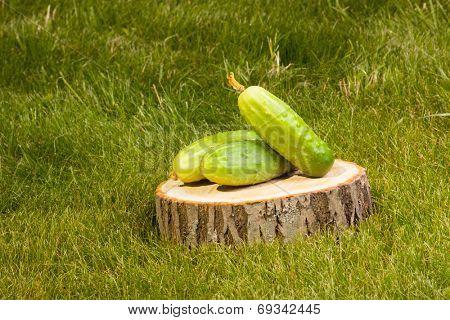 green cucumbers on a tree stump