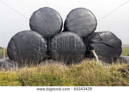 Five Silage Bales