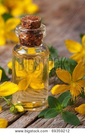 Oil From The Flowers Of St. John's Wort Macro Vertical