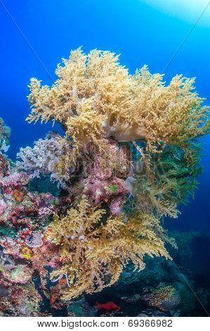Soft corals on a reef
