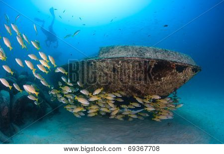 Tropical Fish Near A Wreck