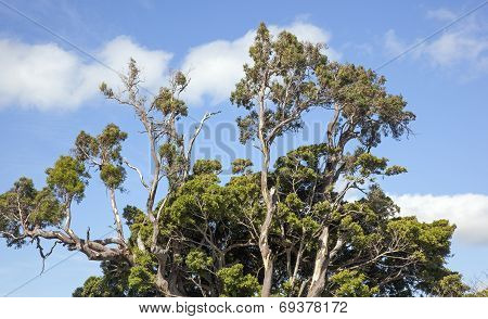 Tree In Hawaii