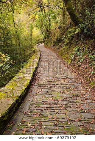 Paved Road In Fragas Do Eume Natural Park In Vertical Composition