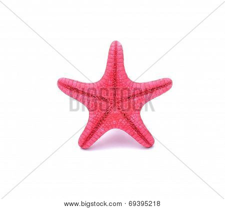 Red Starfish on white background