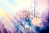 foto of meadows  - Soft focus on yellow meadow flowers and grass in meadow - JPG