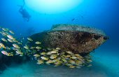 stock photo of red snapper  - SCUBA divers and a shoal of snapper swim around a small underwater yacht wreck - JPG