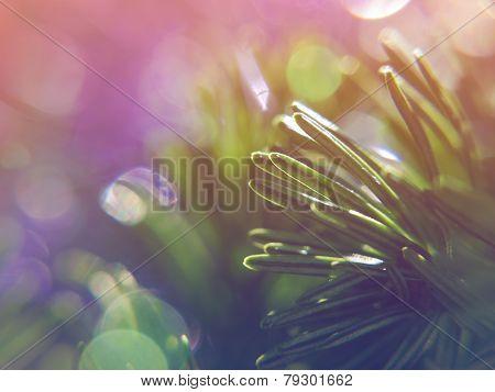 Extreme closeup on fir tree