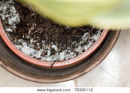Moldy Flowerpot
