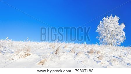 Rural Winter Landscape A Panorama With The Blue Sky, A Field And The One  Tree