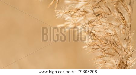Cereal - Oats, Toned Photograph In Warm Color