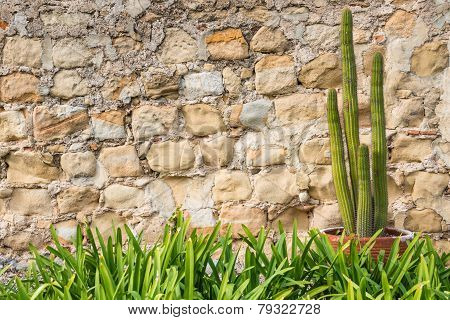 Potted Cactus Plant  Old Stone Wall Grass Border