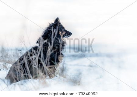 Black dog in winter barren landscape
