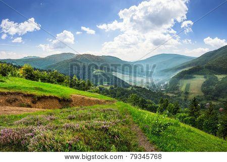 Flowers On Hillside Meadow With Forest In Mountain