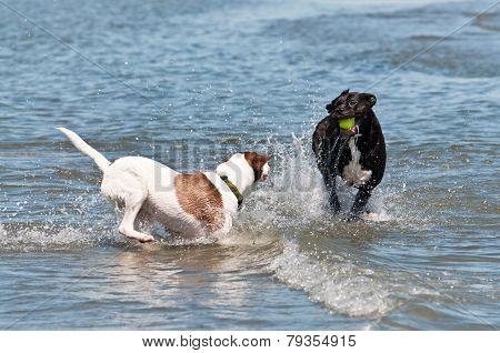 Dogs Splashing In The Water