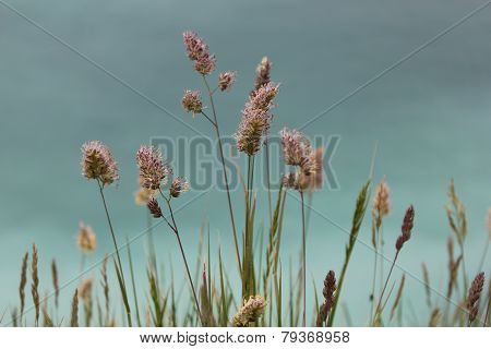 Flowers in Wild