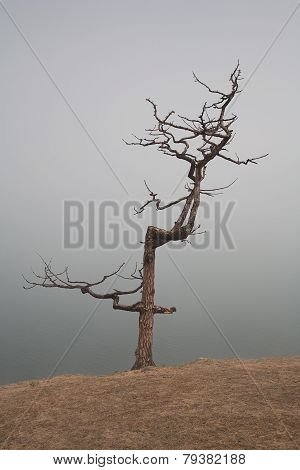 Lonely Tree In A Fog On The Coast