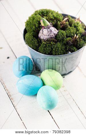 Easter Eggs, Moss, Bulbs.