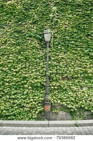 Lantern Of Paris In Green Wall Background