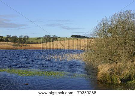 Waldegrave Pool