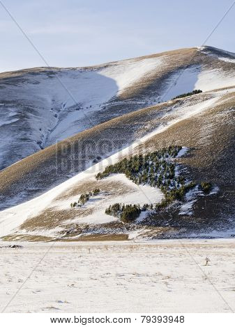 View Of Forest Trees In Snowy Plateau Of Castelluccio Di Norcia, Shaped Boot Of Italy