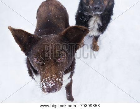 Stray Hungry Dog