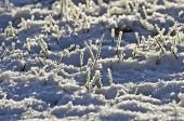 image of blanket snow  - fresh winter snow and hoarfrost abstract background - JPG