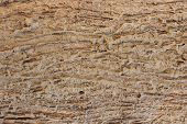 stock photo of termite  - surface of wood that eaten by termites - JPG