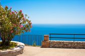 picture of oleander  - Mediterranean sea with oleander from a terrace int Taormina Italy - JPG