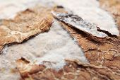 stock photo of rotten  - Close up of rotten coconut  - JPG