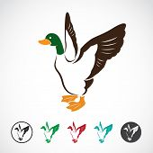 stock photo of duck  - Vector image of an wild duck on white background - JPG