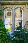 pic of english ivy  - Gothic window overgrown with ivy and roses in the background - JPG